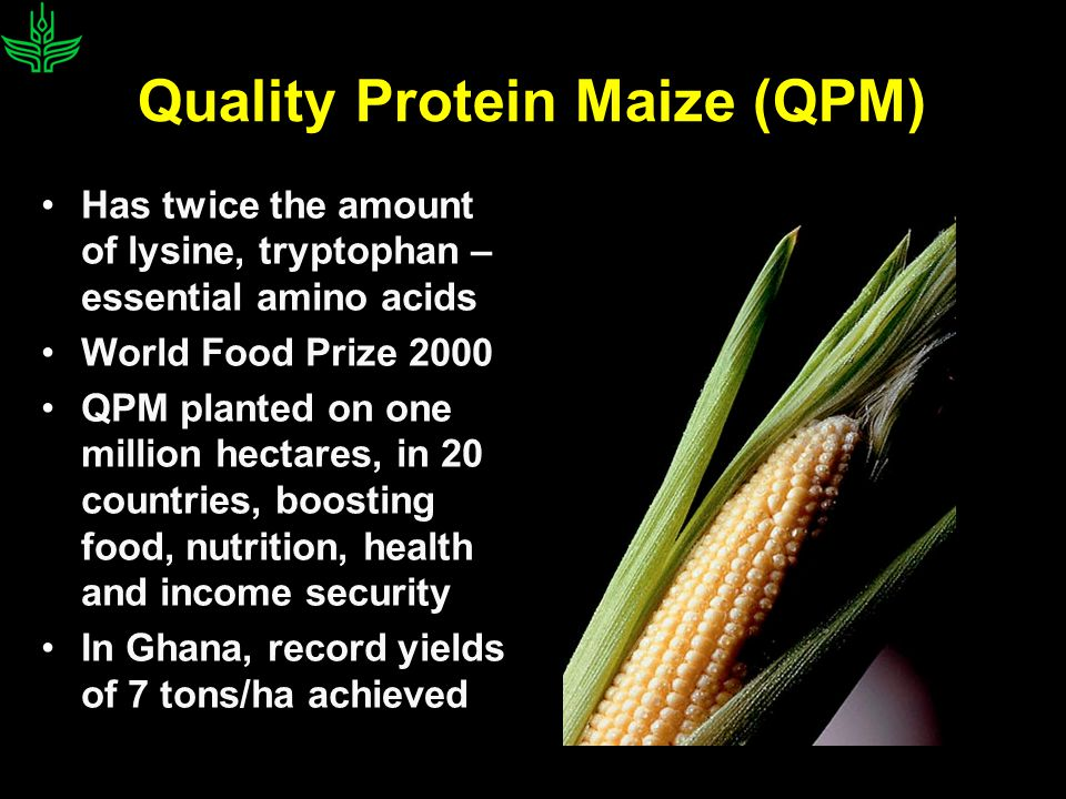 Quality Protein Maize (QPM) Has twice the amount of lysine, tryptophan – essential amino acids World Food Prize 2000 QPM planted on one million hectares, in 20 countries, boosting food, nutrition, health and income security In Ghana, record yields of 7 tons/ha achieved