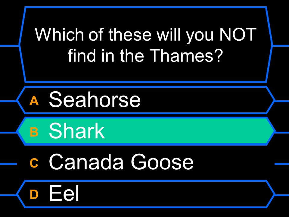 Which of these will you NOT find in the Thames A Seahorse B Shark C Canada Goose D Eel