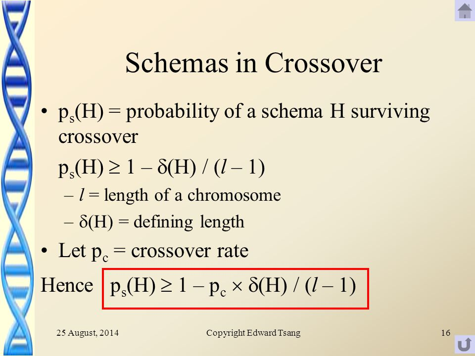 25 August, 2014Copyright Edward Tsang16 Schemas in Crossover p s (H) = probability of a schema H surviving crossover p s (H)  1 –  (H) / (l – 1) –l = length of a chromosome –  (H) = defining length Let p c = crossover rate Hence p s (H)  1 – p c   (H) / (l – 1)