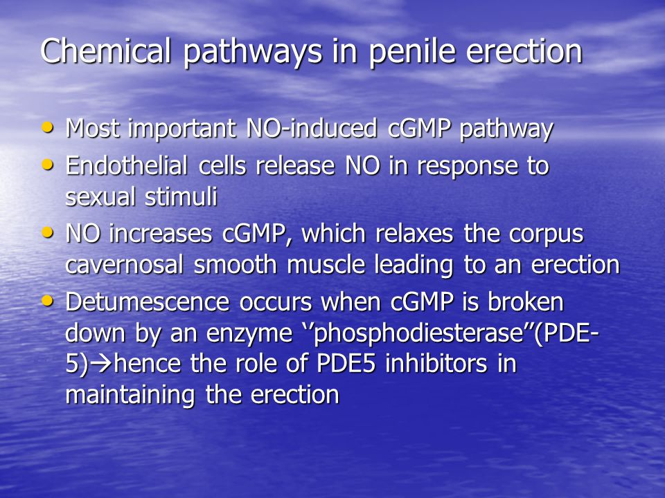 Chemical pathways in penile erection Most important NO-induced cGMP pathway Most important NO-induced cGMP pathway Endothelial cells release NO in response to sexual stimuli Endothelial cells release NO in response to sexual stimuli NO increases cGMP, which relaxes the corpus cavernosal smooth muscle leading to an erection NO increases cGMP, which relaxes the corpus cavernosal smooth muscle leading to an erection Detumescence occurs when cGMP is broken down by an enzyme ''phosphodiesterase''(PDE- 5)  hence the role of PDE5 inhibitors in maintaining the erection Detumescence occurs when cGMP is broken down by an enzyme ''phosphodiesterase''(PDE- 5)  hence the role of PDE5 inhibitors in maintaining the erection