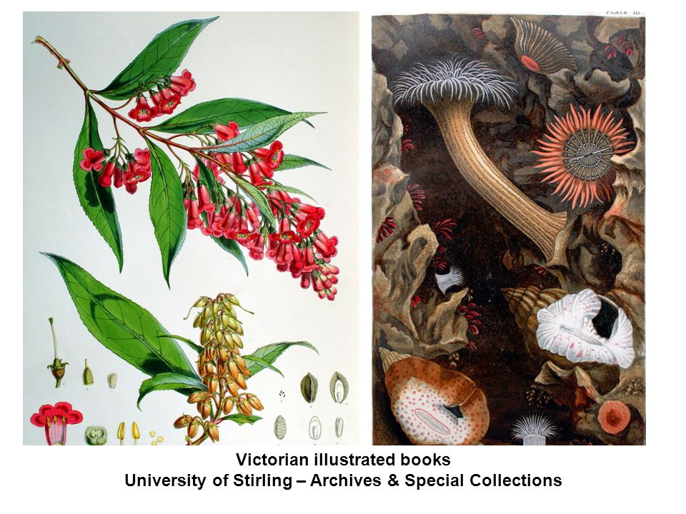 Victorian illustrated books University of Stirling – Archives & Special Collections