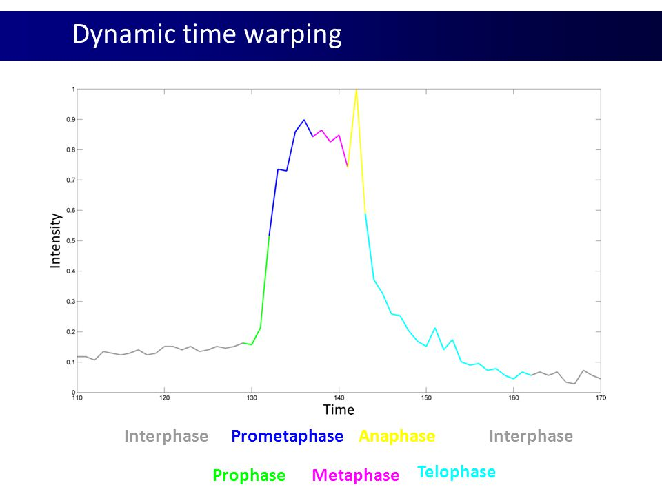 Dynamic time warping Interphase Prophase Prometaphase Metaphase Anaphase Telophase Interphase