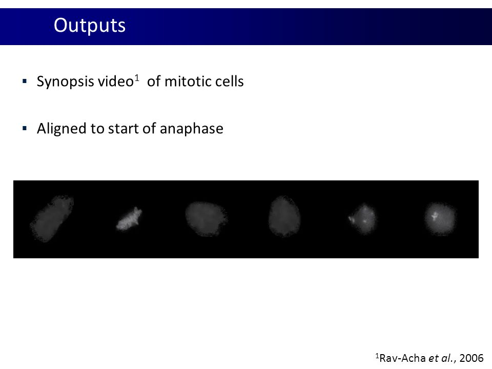  Synopsis video 1 of mitotic cells  Aligned to start of anaphase 1 Rav-Acha et al., 2006