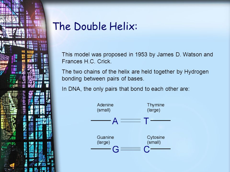 The Double Helix: This model was proposed in 1953 by James D.