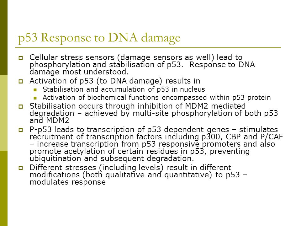 p53 Response to DNA damage  Cellular stress sensors (damage sensors as well) lead to phosphorylation and stabilisation of p53. Response to DNA damage