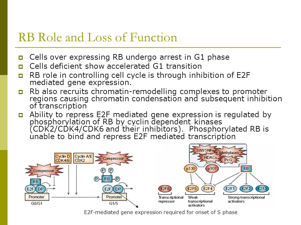 RB Role and Loss of Function  Cells over expressing RB undergo arrest in G1 phase  Cells deficient show accelerated G1 transition  RB role in contr