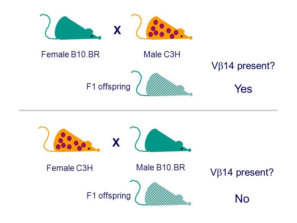 X Male C3HFemale B10.BR No V  14 present? F1 offspring Male B10.BR Female C3H X V  14 present? F1 offspring Yes