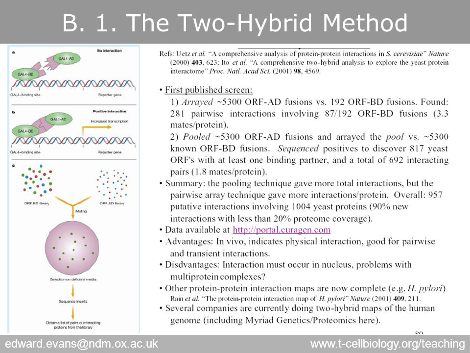 edward.evans@ndm.ox.ac.ukwww.t-cellbiology.org/teaching B. 1. The Two-Hybrid Method