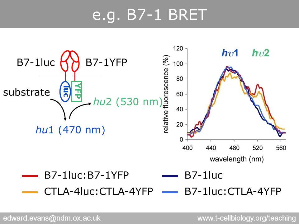 edward.evans@ndm.ox.ac.ukwww.t-cellbiology.org/teaching B7-1luc:B7-1YFP CTLA-4luc:CTLA-4YFP B7-1luc B7-1luc:CTLA-4YFP YFP luc B7-1YFPB7-1luc substrate hu2 (530 nm) hu1 (470 nm) e.g.