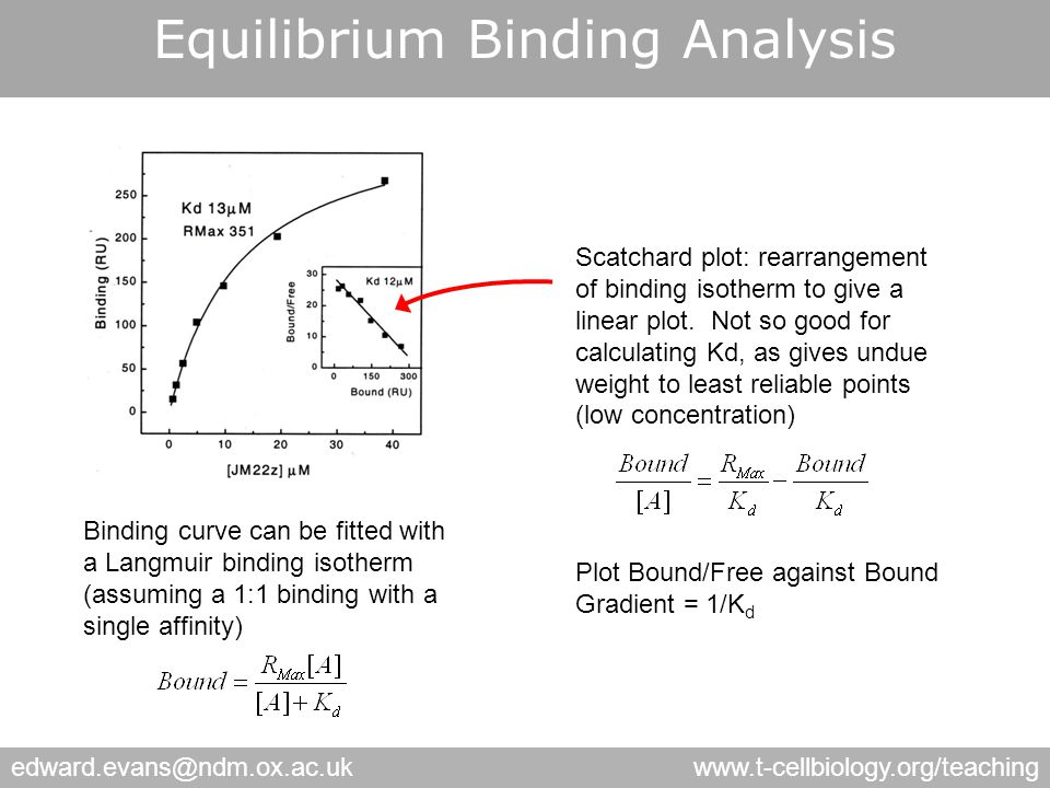 edward.evans@ndm.ox.ac.ukwww.t-cellbiology.org/teaching Binding curve can be fitted with a Langmuir binding isotherm (assuming a 1:1 binding with a single affinity) Scatchard plot: rearrangement of binding isotherm to give a linear plot.