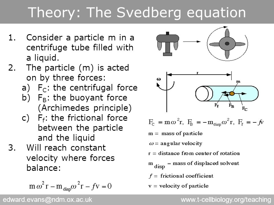 edward.evans@ndm.ox.ac.ukwww.t-cellbiology.org/teaching Theory: The Svedberg equation 1.Consider a particle m in a centrifuge tube filled with a liquid.