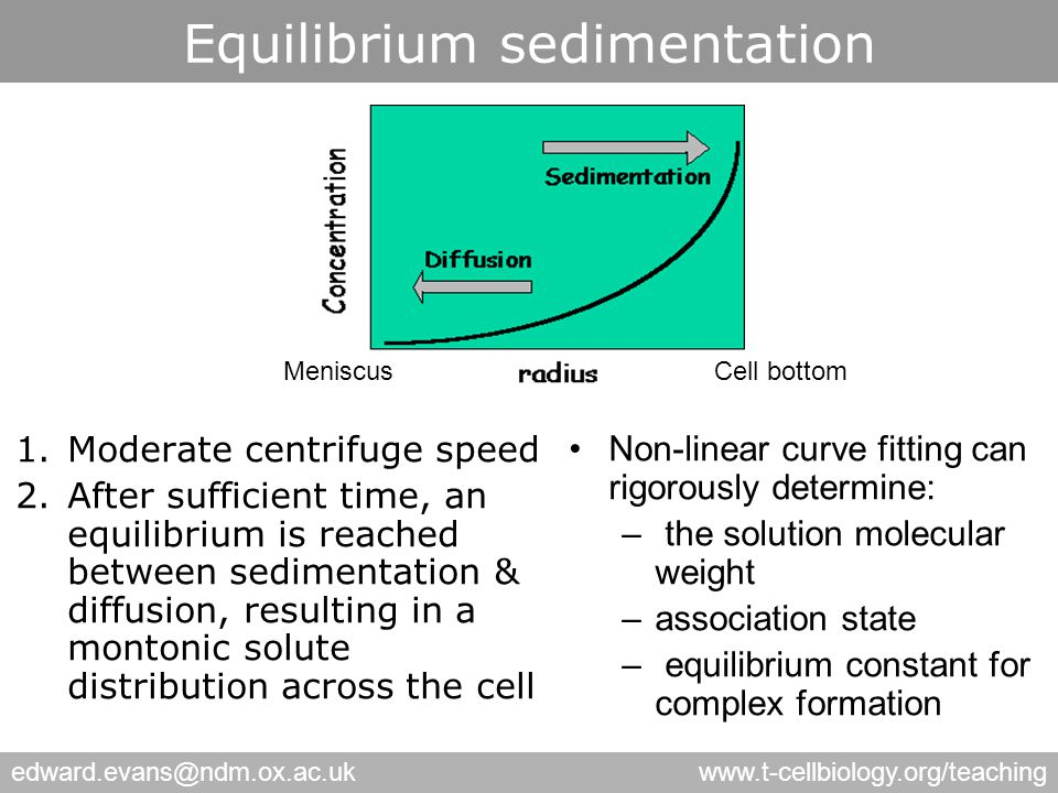 edward.evans@ndm.ox.ac.ukwww.t-cellbiology.org/teaching Equilibrium sedimentation 1.Moderate centrifuge speed 2.After sufficient time, an equilibrium is reached between sedimentation & diffusion, resulting in a montonic solute distribution across the cell Cell bottomMeniscus Non-linear curve fitting can rigorously determine: – the solution molecular weight –association state – equilibrium constant for complex formation
