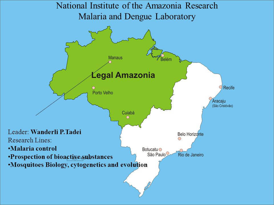 Leader: Wanderli P.Tadei Research Lines: Malaria control Prospection of bioactive substances Mosquitoes Biology, cytogenetics and evolution National Institute of the Amazonia Research Malaria and Dengue Laboratory