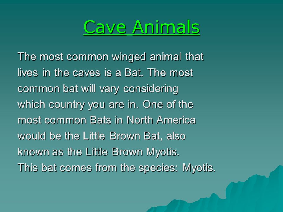CaveAnimals Cave Animals The most common winged animal that lives in the caves is a Bat.