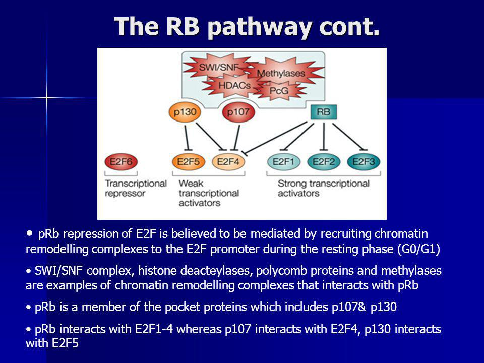 The RB pathway cont.
