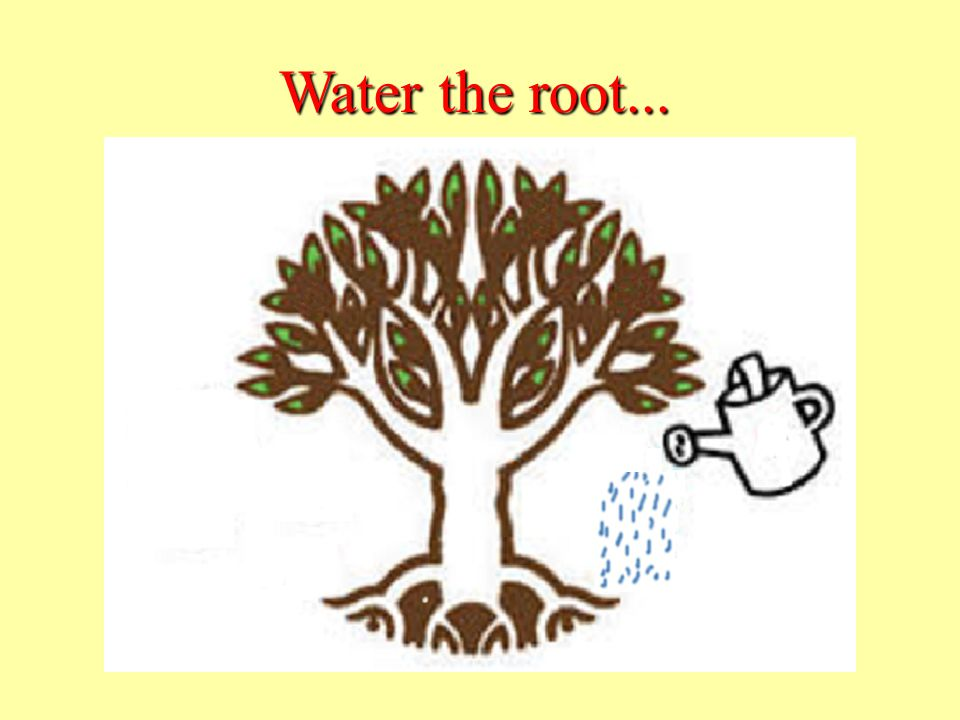 Water the root...