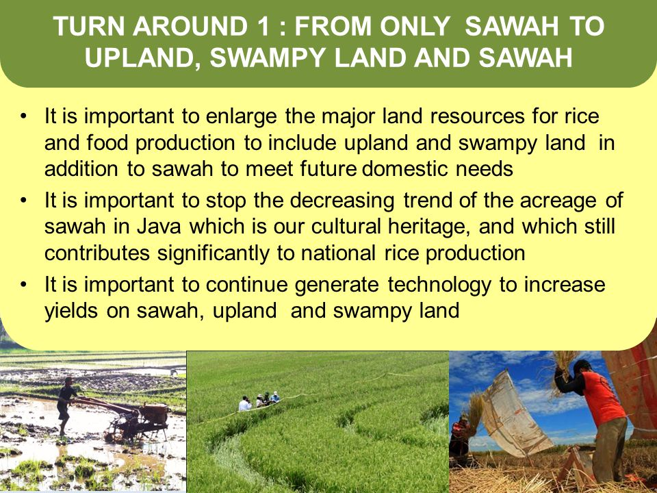 TURN AROUND 1 : FROM ONLY SAWAH TO UPLAND, SWAMPY LAND AND SAWAH It is important to enlarge the major land resources for rice and food production to include upland and swampy land in addition to sawah to meet future domestic needs It is important to stop the decreasing trend of the acreage of sawah in Java which is our cultural heritage, and which still contributes significantly to national rice production It is important to continue generate technology to increase yields on sawah, upland and swampy land