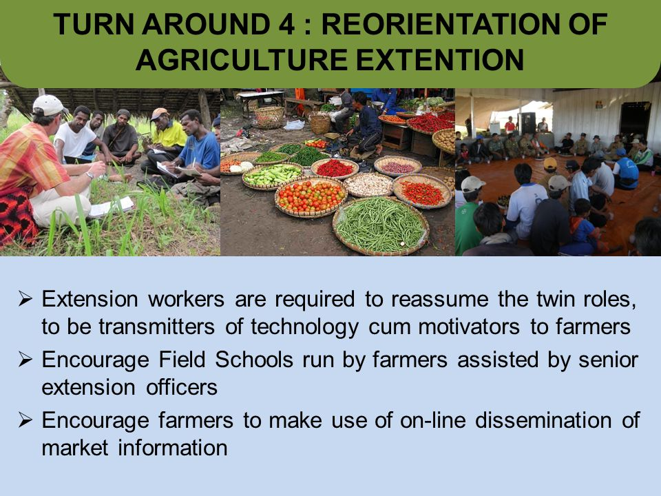 TURN AROUND 4 : REORIENTATION OF AGRICULTURE EXTENTION  Extension workers are required to reassume the twin roles, to be transmitters of technology cum motivators to farmers  Encourage Field Schools run by farmers assisted by senior extension officers  Encourage farmers to make use of on-line dissemination of market information