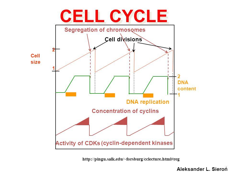http://pingu.salk.edu/~forsburg/cclecture.html#reg Concentration of cyclins Activity of CDKs DNA replication 2 DNA content 1 Segregation of chromosome