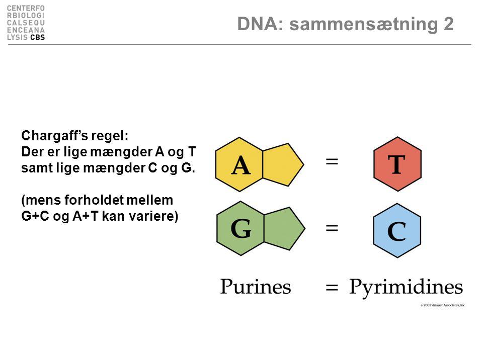 DNA: sammensætning 2 Chargaff's regel: Der er lige mængder A og T samt lige mængder C og G.