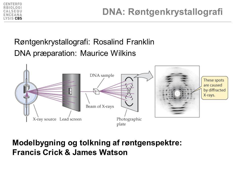 DNA: Røntgenkrystallografi Røntgenkrystallografi: Rosalind Franklin DNA præparation: Maurice Wilkins Modelbygning og tolkning af røntgenspektre: Francis Crick & James Watson