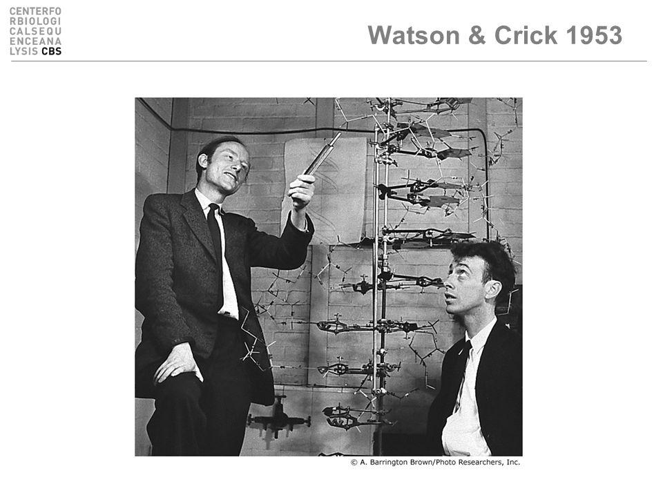 Watson & Crick 1953