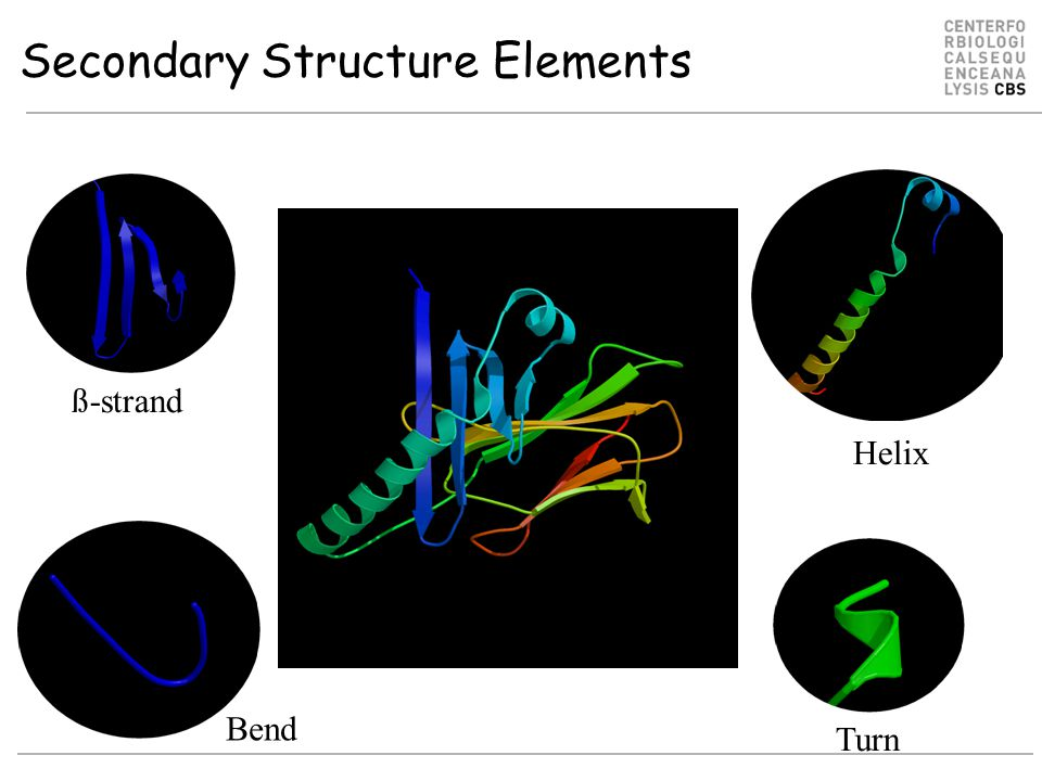 ß-strand Helix Turn Bend Secondary Structure Elements