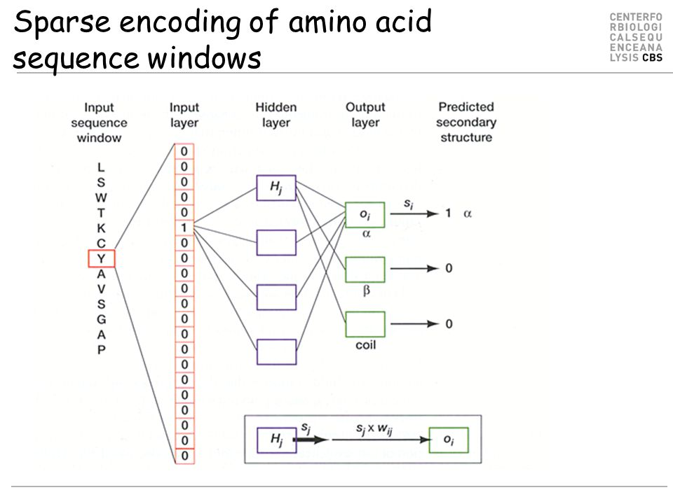 Sparse encoding of amino acid sequence windows