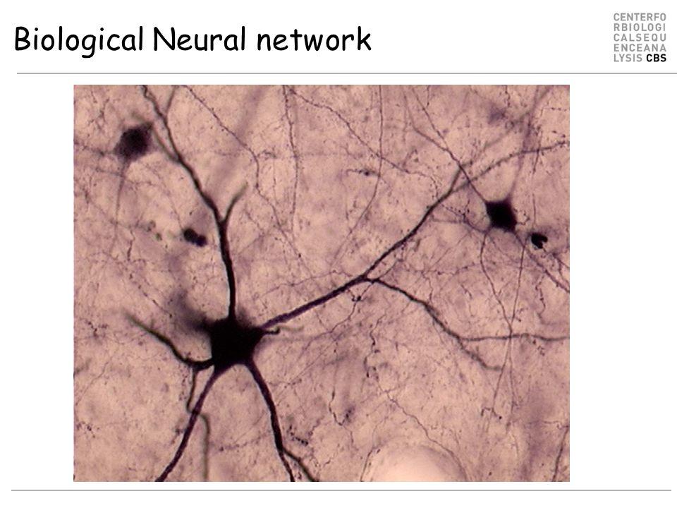 Biological neuron structure