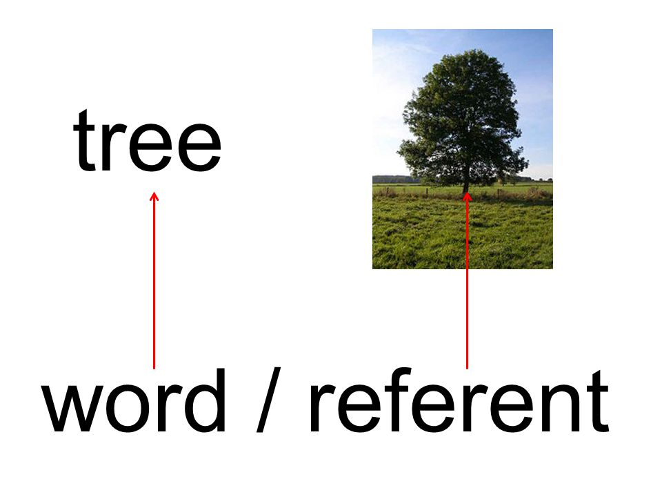 tree word / referent