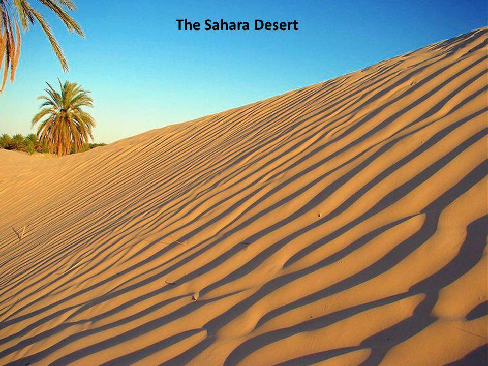 © Dr. Geoffrey Neuss - Independent, International, Innovative The Sahara Desert