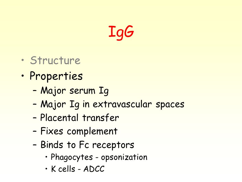 IgG Structure Properties –Major serum Ig –Major Ig in extravascular spaces –Placental transfer –Fixes complement –Binds to Fc receptors Phagocytes - opsonization K cells - ADCC