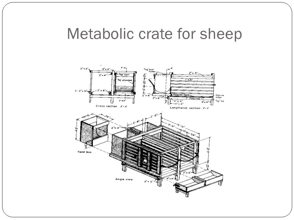 Metabolic crate for sheep
