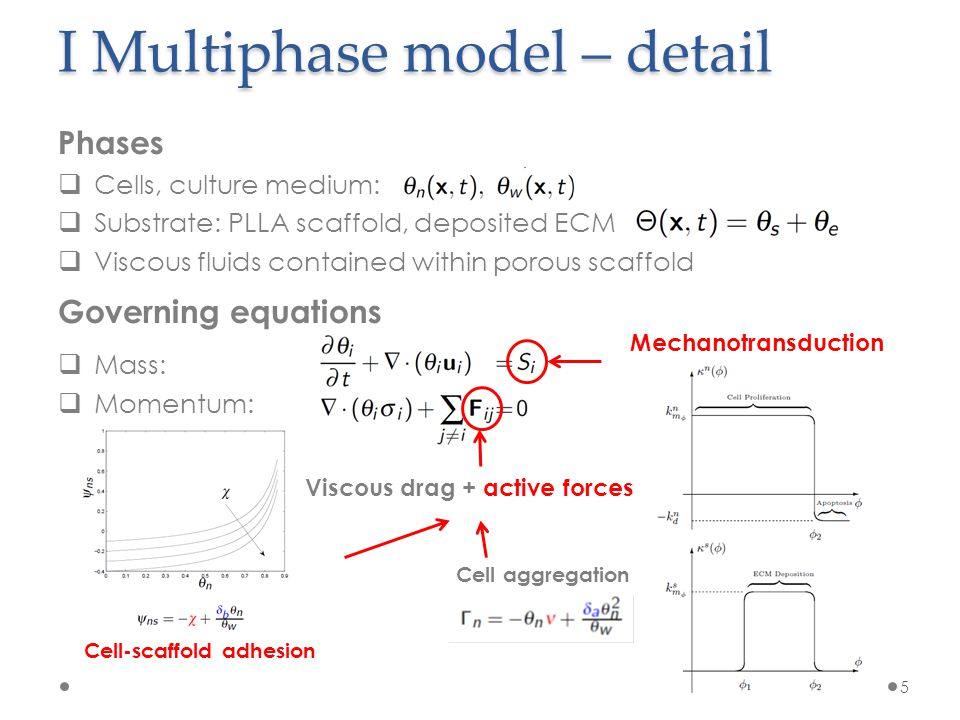 I Multiphase model – investigations 6 1.Geometry (2D vs 1D) 2.Cell-scaffold interaction model 3.