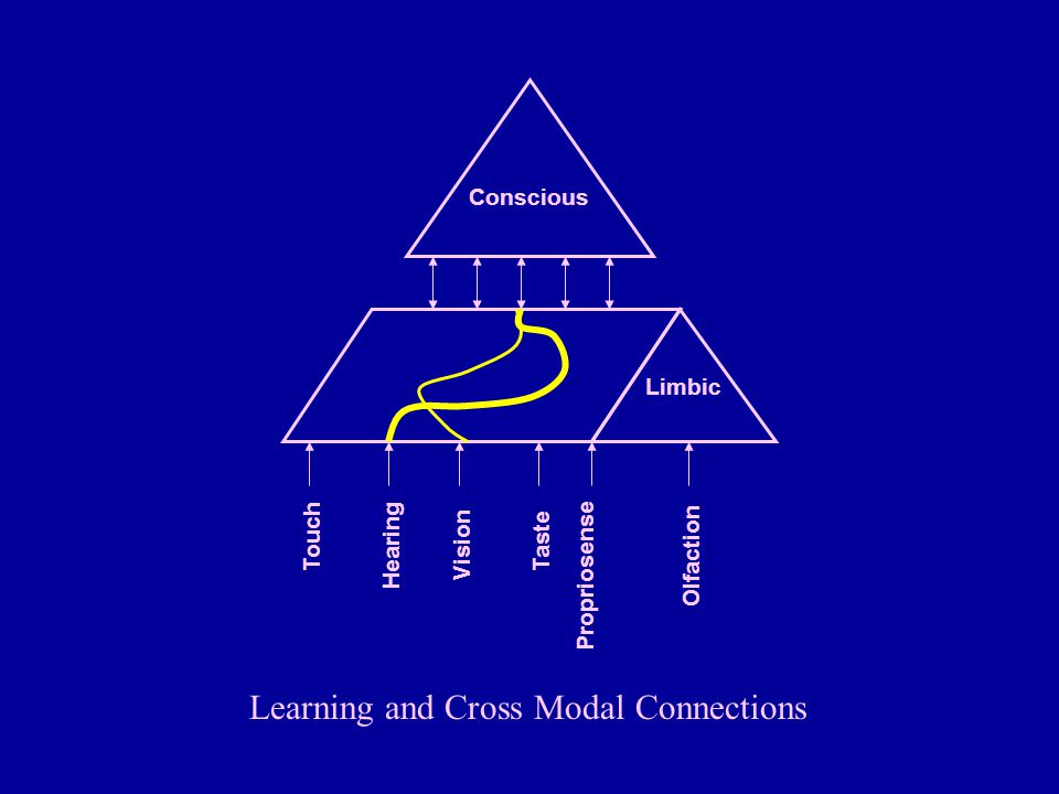 Learning and Cross Modal Connections Propriosense Conscious Limbic Touch Hearing Vision Olfaction Taste
