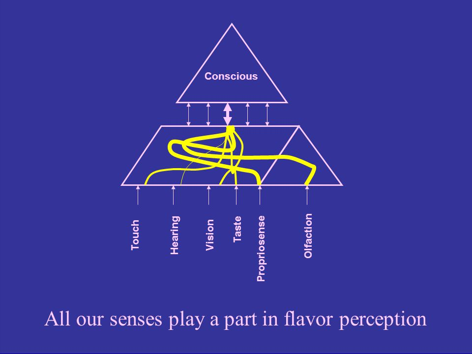 Conscious Touch Hearing Vision Propriosense Olfaction Taste All our senses play a part in flavor perception