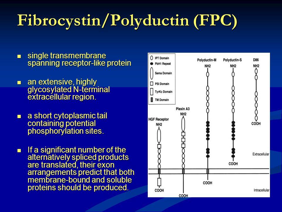 Fibrocystin/Polyductin (FPC) single transmembrane spanning receptor-like protein single transmembrane spanning receptor-like protein an extensive, hig