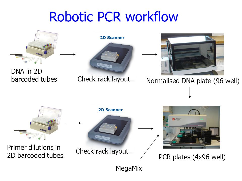 Robotic PCR workflow DNA in 2D barcoded tubes Check rack layout Normalised DNA plate (96 well) Primer dilutions in 2D barcoded tubes Check rack layout