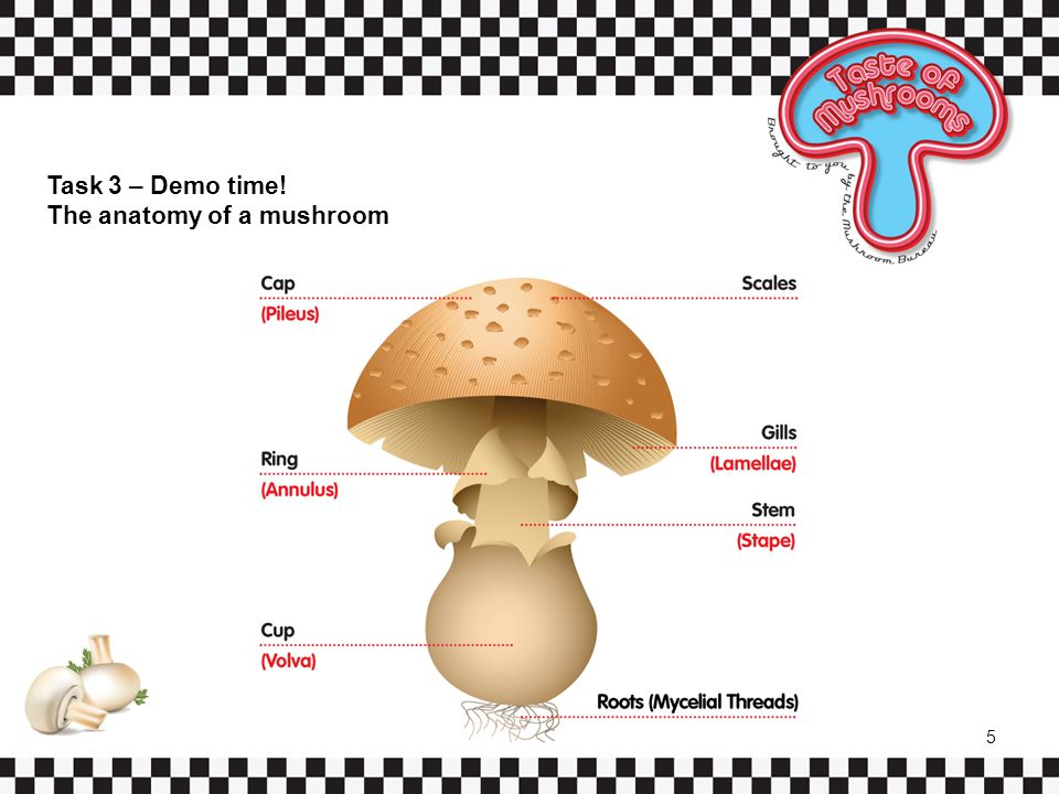Task 3 – Demo time! The anatomy of a mushroom 5
