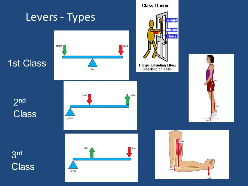 Levers Three classes of levers Examples of the use of levers in the body Relationship of levers to effective performance – mechanical advantages and d