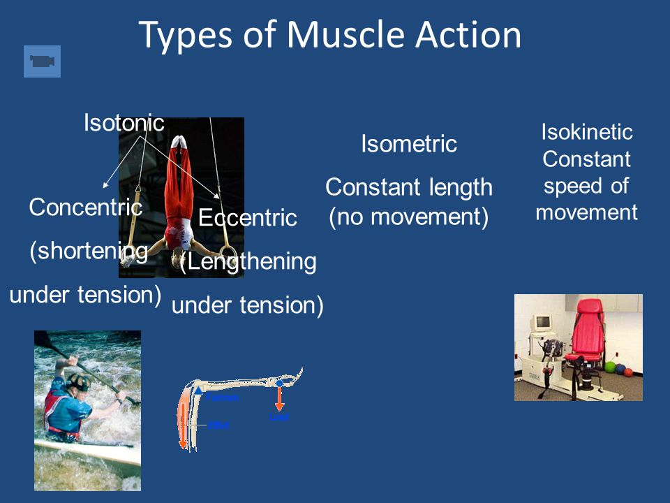 Agonists and Antagonists Agonist – Prime Mover Muscle or muscle group mainly responsible for a movement Antagonist Muscle or muscle group that acts to
