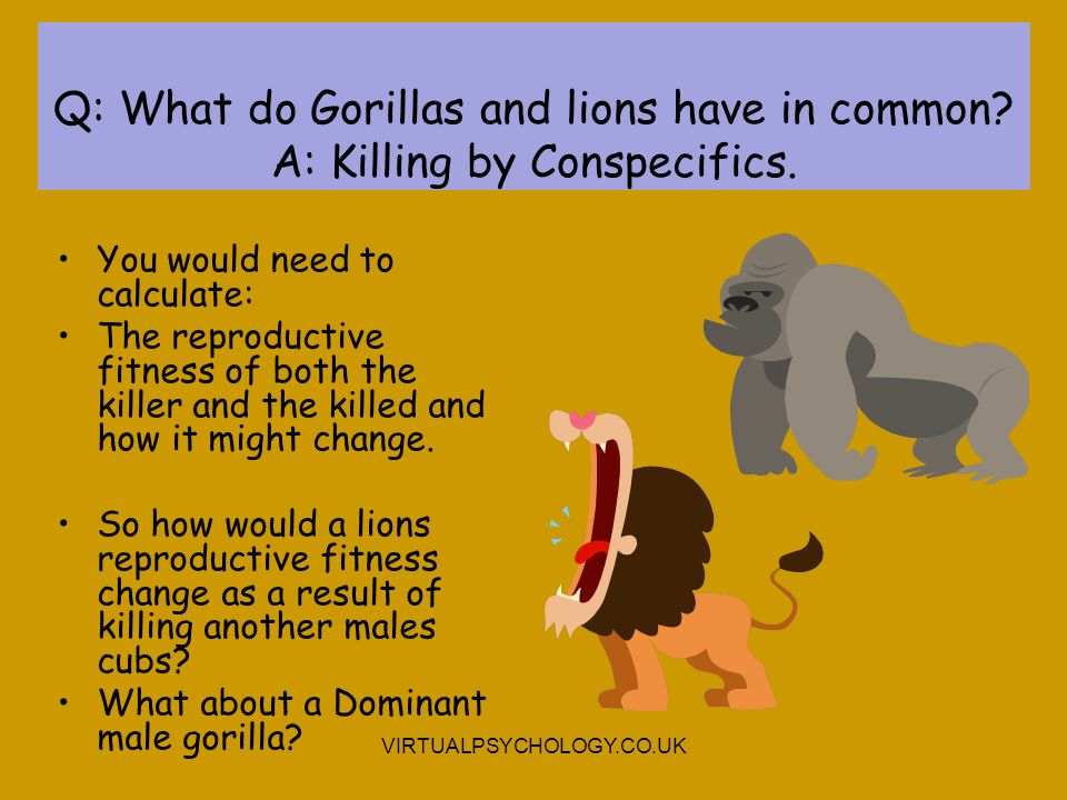 Q: What do Gorillas and lions have in common? A: Killing by Conspecifics. You would need to calculate: The reproductive fitness of both the killer and