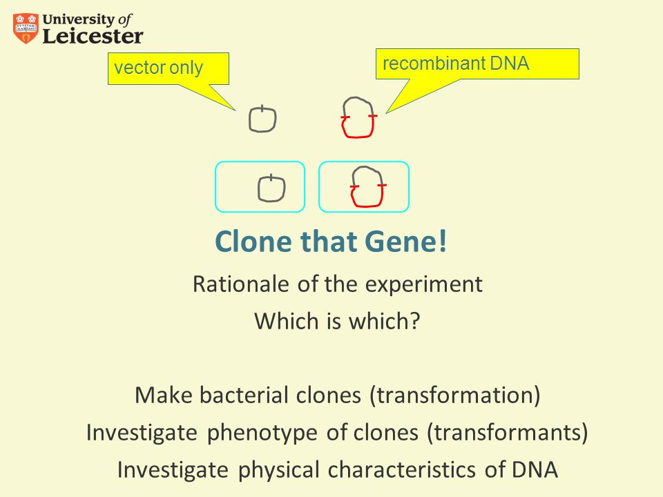 Clone that Gene. Rationale of the experiment Which is which.