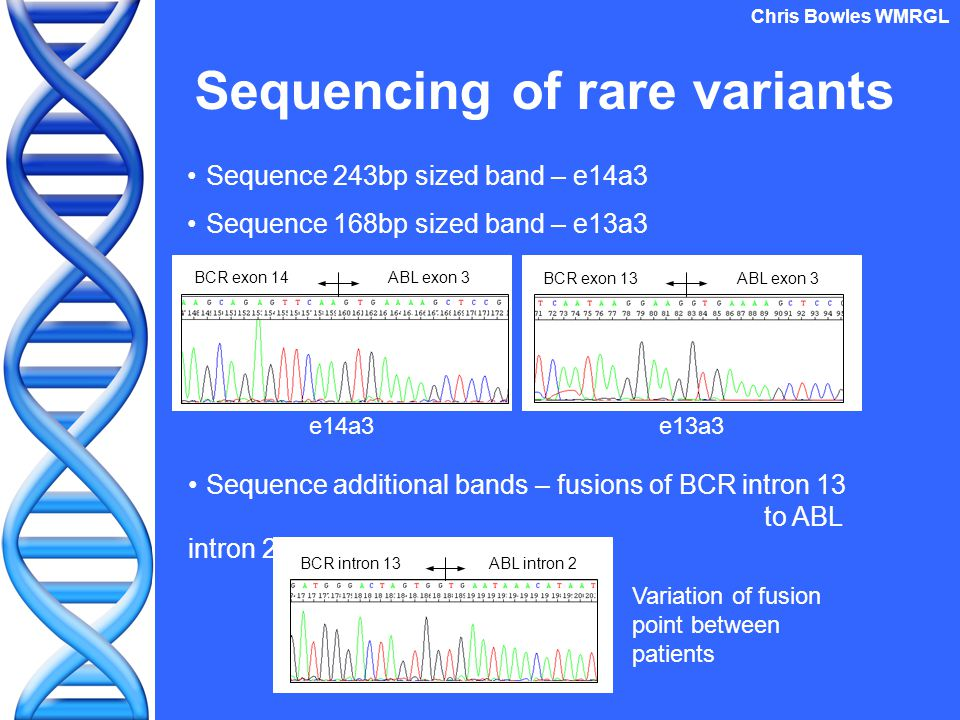 Origin of additional band Genomic contamination of RNA extraction Sequence genomic DNA stored on one patient Looking at original genomic breakpoint for fusion gene Why extra bands in e13a3 patients only.
