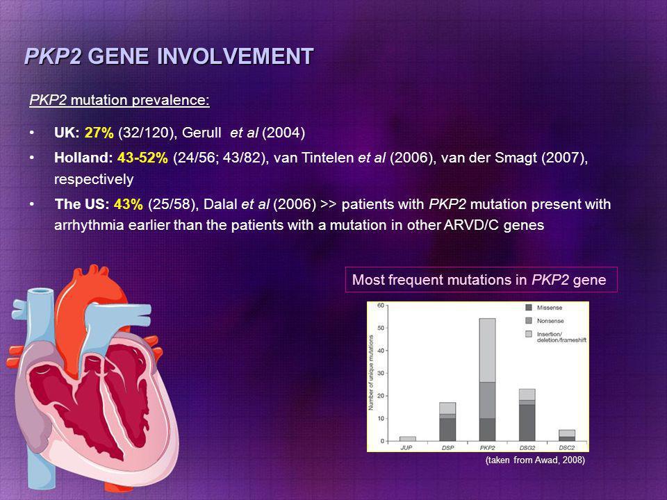 PKP2 GENE INVOLVEMENT PKP2 mutation prevalence: UK: 27% (32/120), Gerull et al (2004) Holland: 43-52% (24/56; 43/82), van Tintelen et al (2006), van d