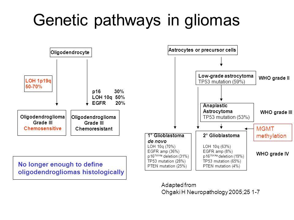 Genetic pathways in gliomas Adapted from Ohgaki H Neuropathology 2005;25 1-7 MGMT methylation Oligodendrocyte Oligodendroglioma Grade III Chemosensiti