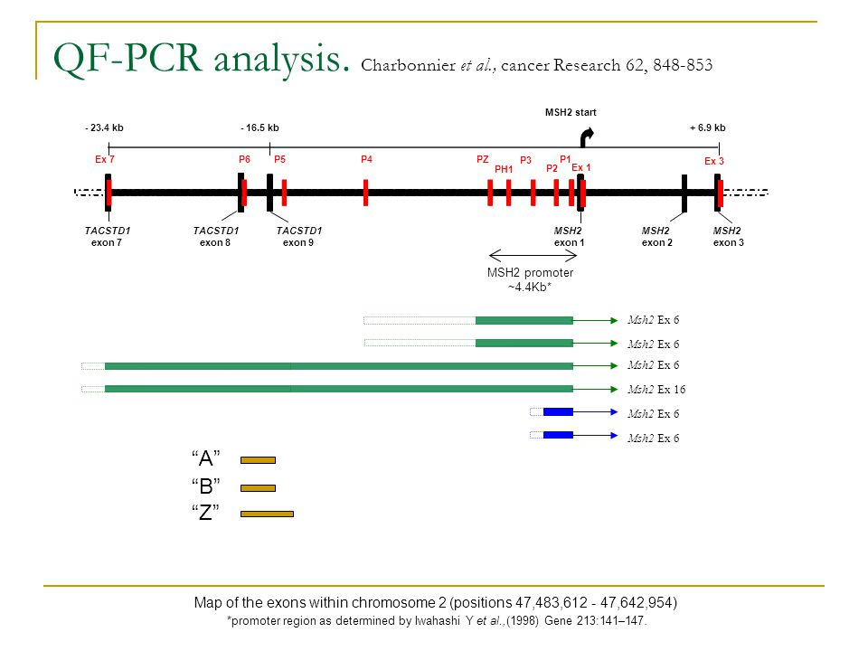 QF-PCR analysis.