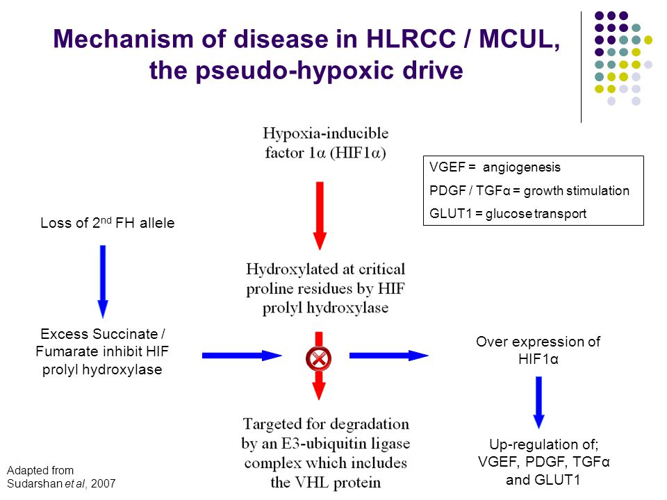 Excess Succinate / Fumarate inhibit HIF prolyl hydroxylase Loss of 2 nd FH allele Over expression of HIF1α Up-regulation of; VGEF, PDGF, TGFα and GLUT1 Mechanism of disease in HLRCC / MCUL, the pseudo-hypoxic drive VGEF = angiogenesis PDGF / TGFα = growth stimulation GLUT1 = glucose transport Adapted from Sudarshan et al, 2007