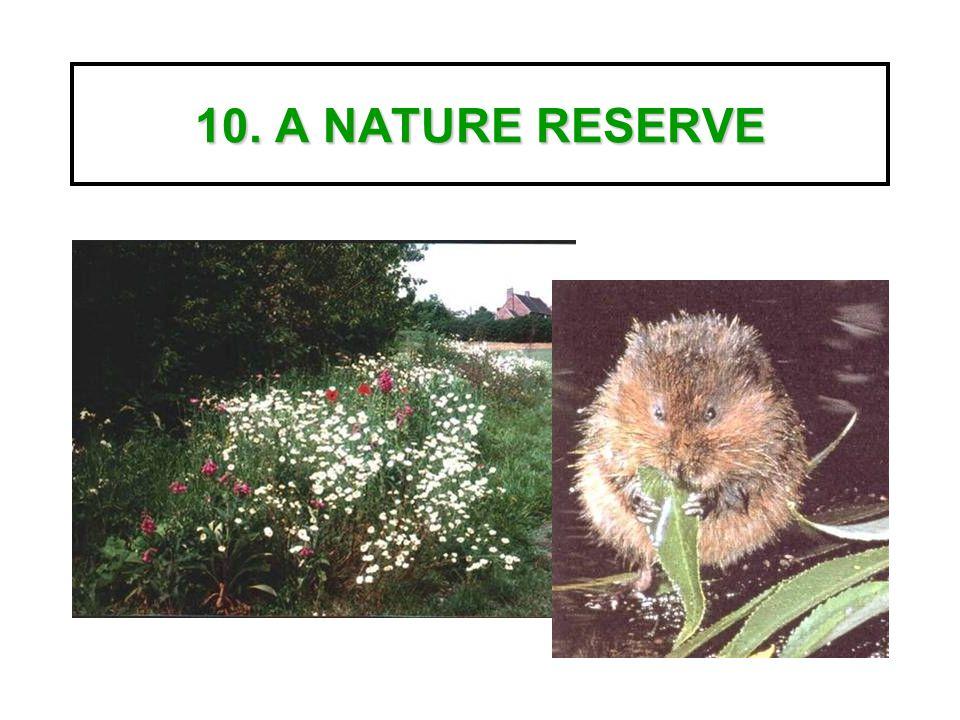 10. A NATURE RESERVE