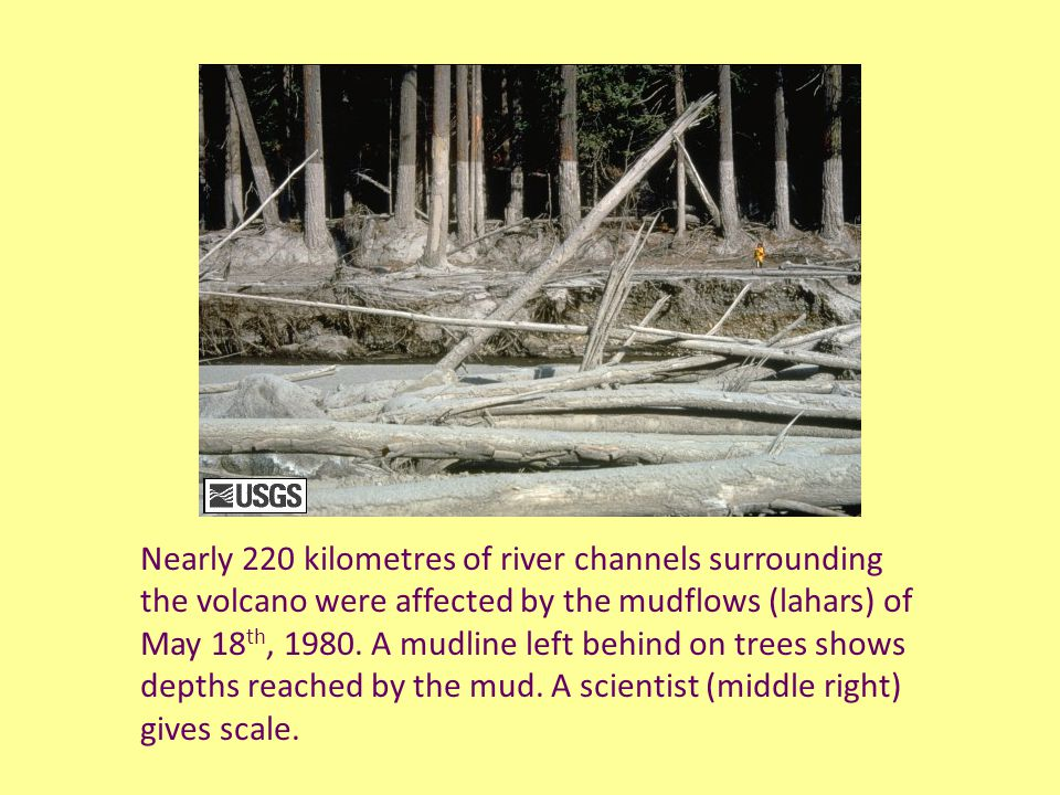 Nearly 220 kilometres of river channels surrounding the volcano were affected by the mudflows (lahars) of May 18 th, 1980.